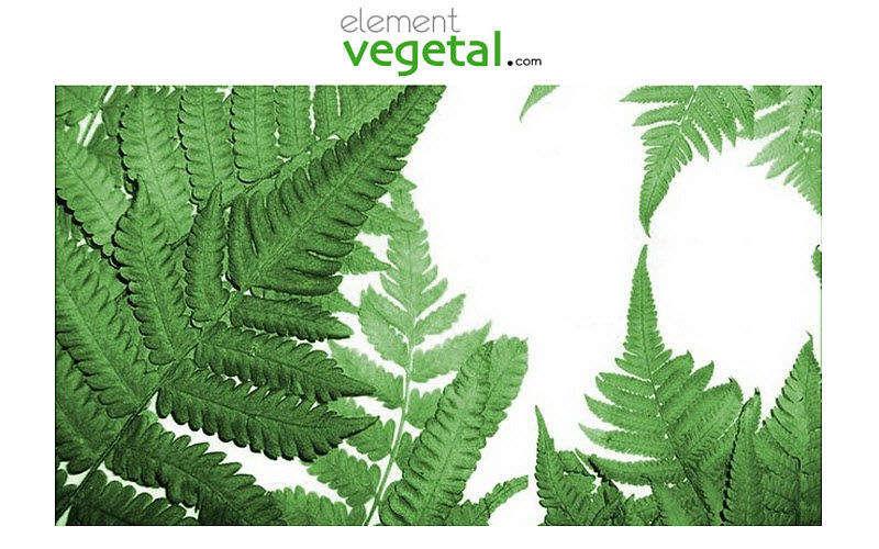 Element Vegetal Plante stabilisée Arbres et plantes Fleurs et Senteurs  |