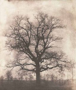 LINEATURE - an oak tree in winter - 1842-43 - Photographie