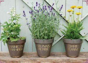 PIED DE POULE - mauvaise herbe - Pot De Jardin