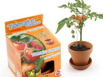 Radis Et Capucine - le semis de la tomate-cerise pour les enfants - Potager D'intérieur