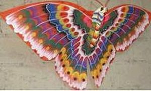 Nature Collection Bali - papillon - Cerf Volant