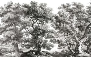 Ananbô - sous-bois noir et blanc - Papier Peint Panoramique