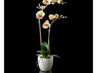 Deco Factory - Phalaenopsis Artificiel En Pot Java - Composition Florale
