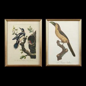 Expertissim - neuf reproductions encadr�es figurant des oiseaux - Estampe