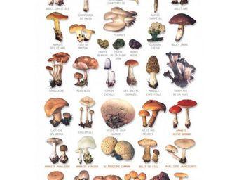 OCEANS ET JARDINS  O&J - carte postale champignons - Poster