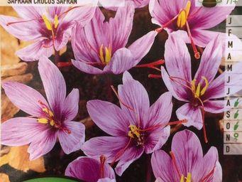 LES DOIGTS VERTS - bulbe crocus sativus x7 - Bulbes De Fleurs