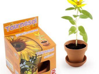 Radis Et Capucine - un tournesol � faire pousser par les enfants - Potager D'int�rieur