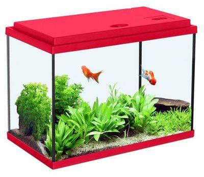 ZOLUX - Aquarium-ZOLUX-Aquarium enfant rouge cerise