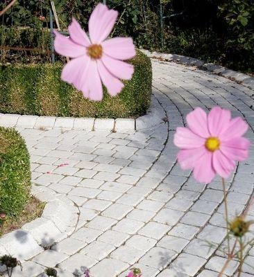 MARLUX - Bordure de jardin-MARLUX-Vieillie