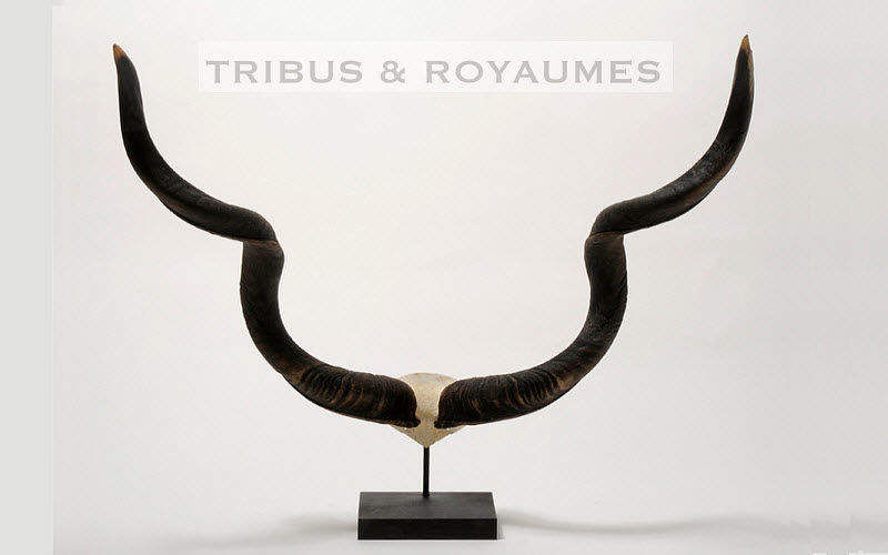 TRIBUS & ROYAUMES Hunting trophy Taxidermy and hunting trophy Ornaments Entrance | Elsewhere