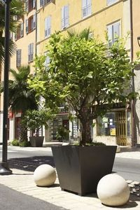 Larbaletier -  - Tree Pot