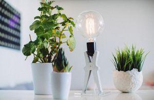 Monsieur Kacha - croco-- - Table Lamp