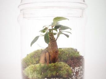 GREEN FACTORY - dôme ficus - Terrarium Garden Under Glass
