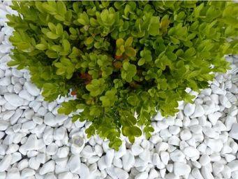CLASSGARDEN - galet blanc pure pack de 10 m² calibre 12-24 mm - Pebble Flooring