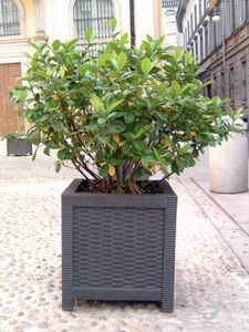 CALZOLARI -  - Tree Pot