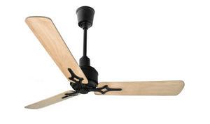 WHOO WHOO WHOO - jaipur black - Ceiling Fan