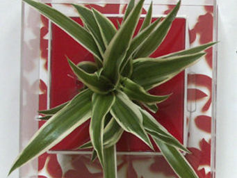LES JARDINS DE CHLOE - zelie - Organic Artwork