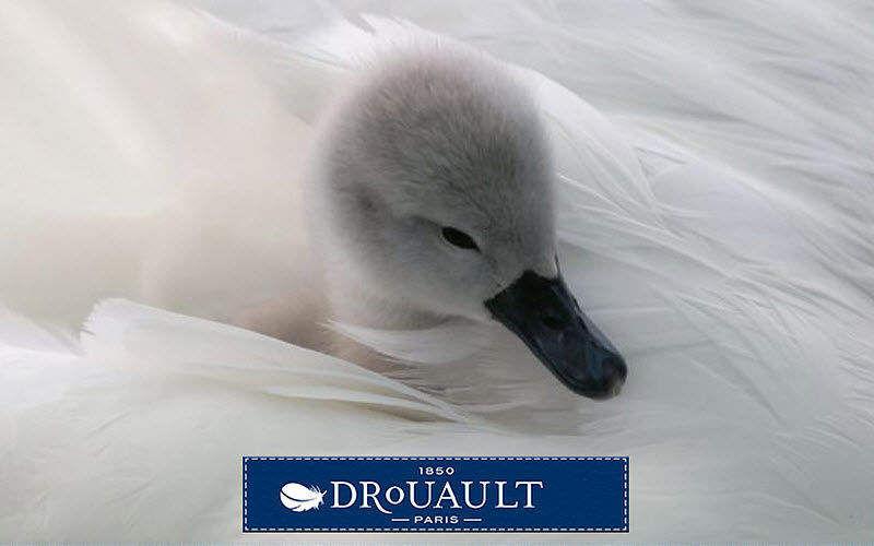 Drouault  |