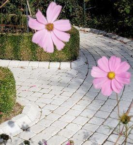 Tradewinds Garten Rabatten