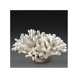 JD Co Marine -  - Koralle