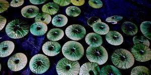 Fos Ceramiche -  - Wandverkleidung