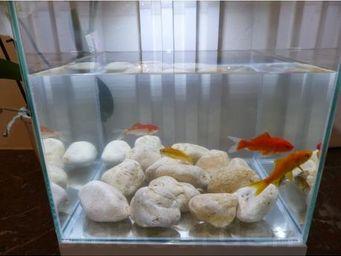 CLASSGARDEN - galet jaune aquarium 20-40 mm - Brunnen Aquarium