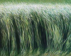 MANUEL CANCEL - son bou - Zeitgenössische Gemälde