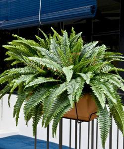 Euroflor - fougères - Kunstpflanze