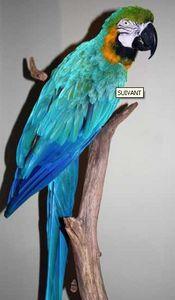 Design Et Nature -  - Ausgestopftes Tier