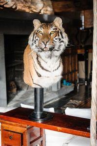 MASAI GALLERY -  - Ausgestopftes Tier