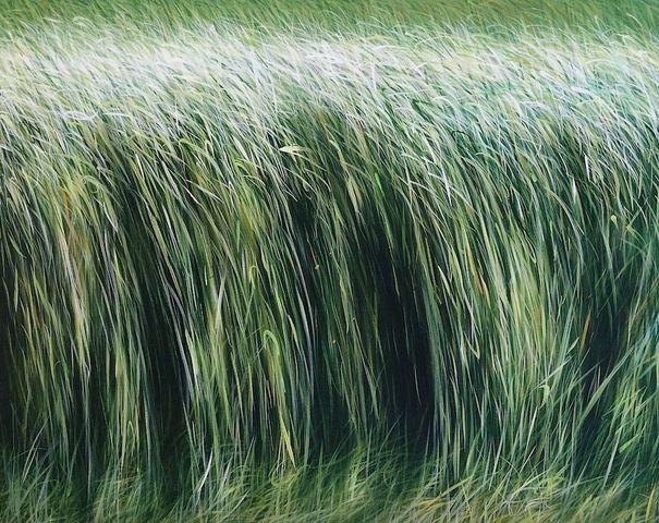 MANUEL CANCEL - Zeitgenössische Gemälde-MANUEL CANCEL-Son bou