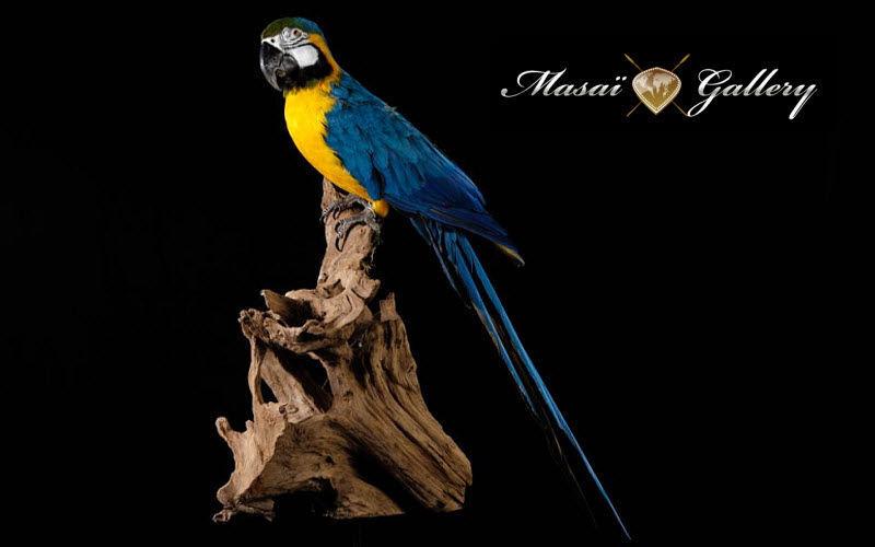 MASAI GALLERY animal disecado Taxidermia y trofeos de caza Ornamentos   