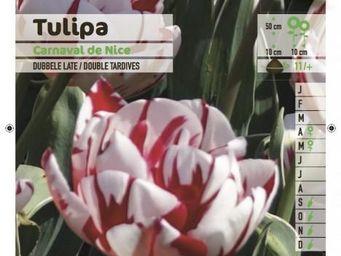LES DOIGTS VERTS - bulbe tulipe double tardive carnaval de nice x5 - Bulbos De Flores
