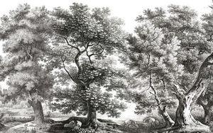 Ananbô - sous-bois noir et blanc - Papel Pintado Panorámico