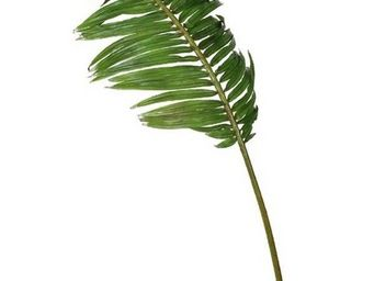 Deco Factory - Feuille De Palmier Cycas Artificiel Fez - Follaje