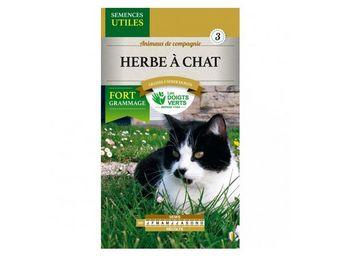 LES DOIGTS VERTS - semence herbe à chat - Semilla