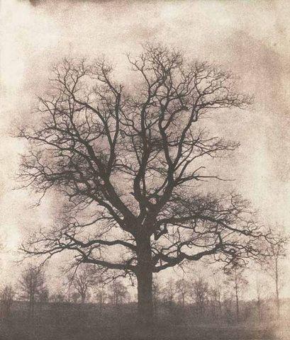 LINEATURE - Fotografía-LINEATURE-An oak tree in winter - 1842-43