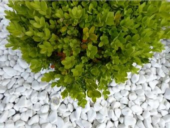 CLASSGARDEN - galet blanc pure pack de 10 m² calibre 12-24 mm - Ciottolato / Pavimento In Ciottoli