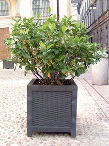 CALZOLARI -  - Vaso Per Albero
